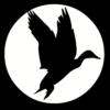 TG-Bird