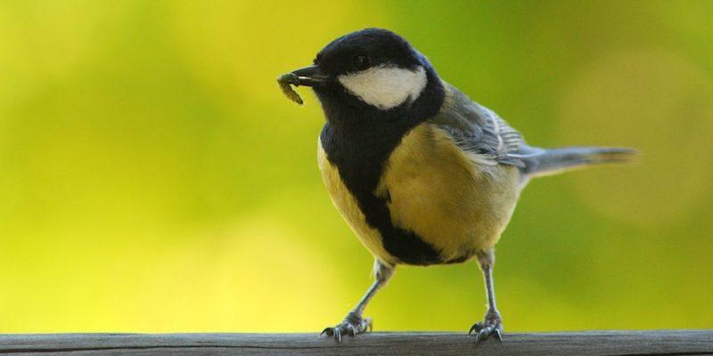 HM-birdwatching