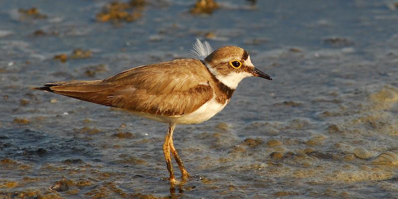 bird_destaque